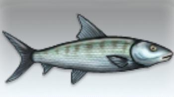 File:Bonefish.jpg