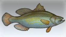 Nile Perch