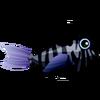 Charcoal Lionfish (1)