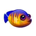 Coral Beauty Angelfish (2).png