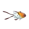 Lyretail Hogfish (1)