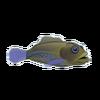 Blue Spot Grouper (1)