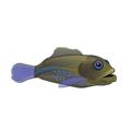 File:Blue Spot Grouper (1).png
