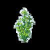 Green Kelp