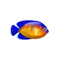 Coral Beauty Angelfish (1).png