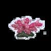 Chili Coral