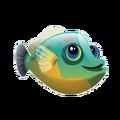Orangehead Filefish (2)