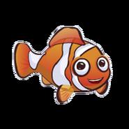 Percula Clownfish (2)