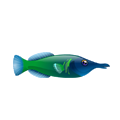 Water Wrasse (1).png