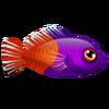 Purple Top Dotty (1)