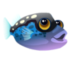 Blue Boxfish (baby)