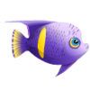Asfur Angelfish (1)