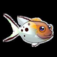 Lyretail Hogfish (2)
