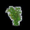 Broad Leaf Ludwigia