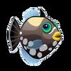 Clown Triggerfish (2)