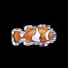 Percula Clownfish (1)