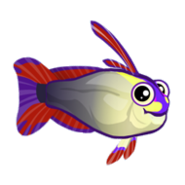 Purple Firefish (2)