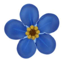 File:Forget me not flower.png