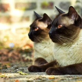Twins Li