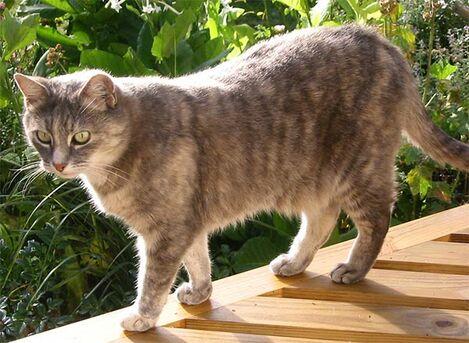Company-cat-grey