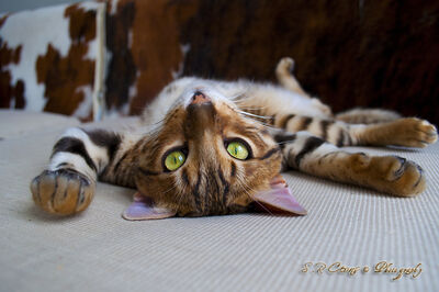 Flat as cat by ceons-d4ulfw5