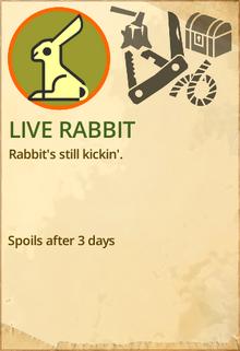 Live rabbit