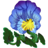 Blue Vein Pansy