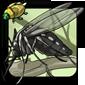 Salt-Marsh Mosquito