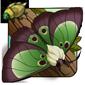 Reverse Silkworm Moth