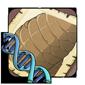 Scales Gene