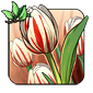 Carnaval Tulip
