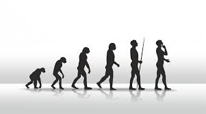 File:EvolutionOfHumans.png