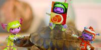 Project Tortoise