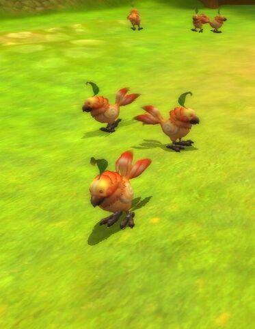 File:Dodo's.jpg