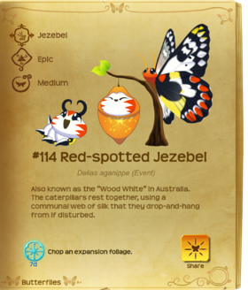 Red-spotted Jezebel§Flutterpedia