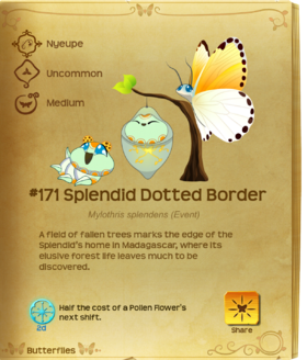 Splendid Dotted Border§Flutterpedia