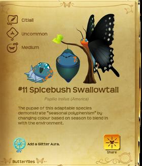 Spicebush Swallowtail§Flutterpedia