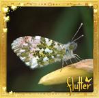 Flutterfact20130807JapaneseMyths