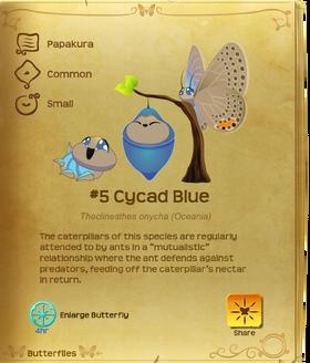 Cycad Blue§Flutterpedia