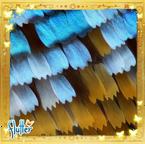 Flutterfact20150713NanoGrooves