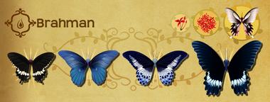 Brahman Set§Flutterpedia