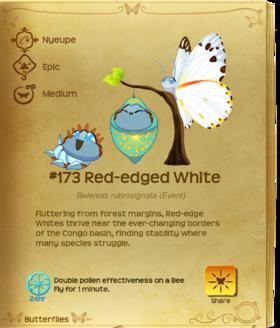 Red-edged White§Flutterpedia