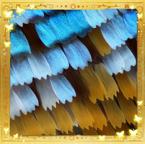 Flutterfact20140610LightBending