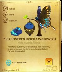 Eastern Black Swallowtail§Flutterpedia V1.90