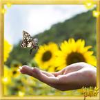 Flutterfact20151012LastMonthOfOtonoButterflies