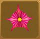 Turmeric Set§AF 20%