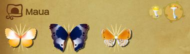 Maua Set§Flutterpedia