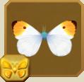 File:Orange Tip§Headericon.png
