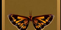Cosinga Hawker