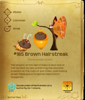 Brown Hairstreak§Flutterpedia